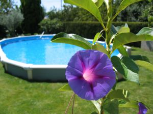 922602_the_purple_of_summer_.jpg